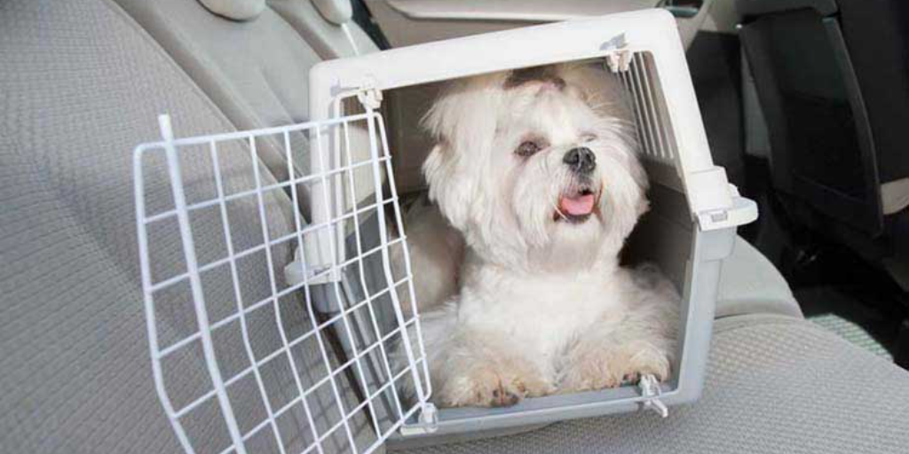Tips for Safe Driving with Pets
