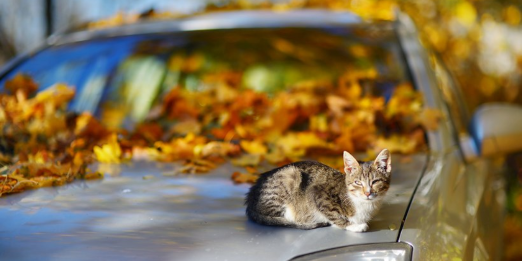 Is your car ready for the fall season?